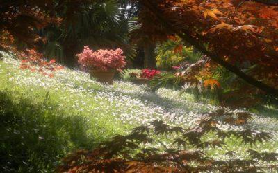Un percorso fra storia e natura – visita guidata al parco di Villa Durazzo